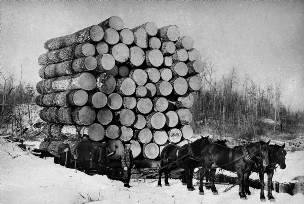 Logs being hauled out of the forest on horse-drawn sleighs